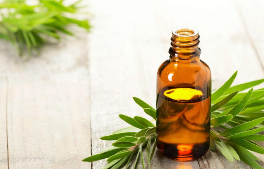 5 maravillosos usos del aceite del árbol del té 🌿🌿