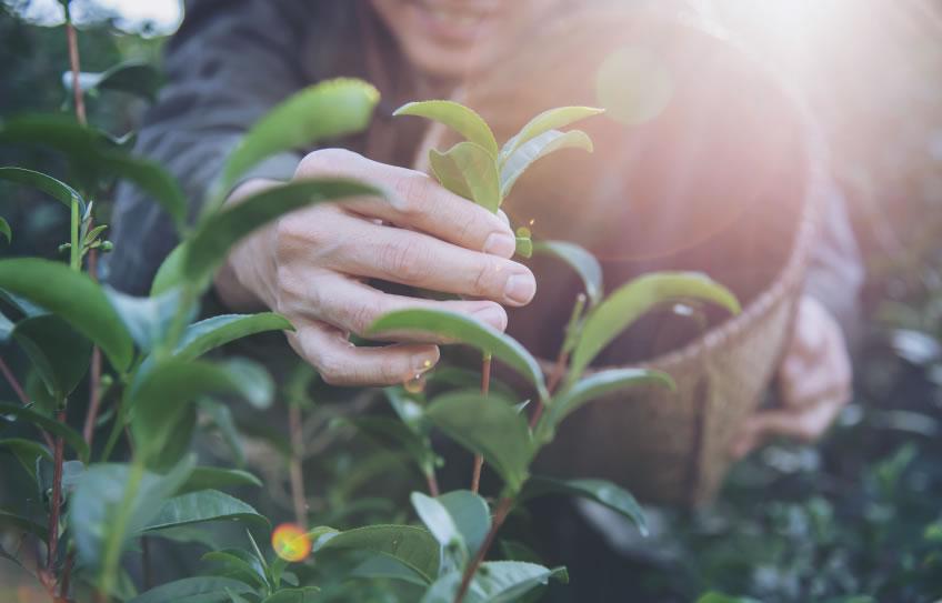 6 soluciones de Medicina Natural para combatir los hongos